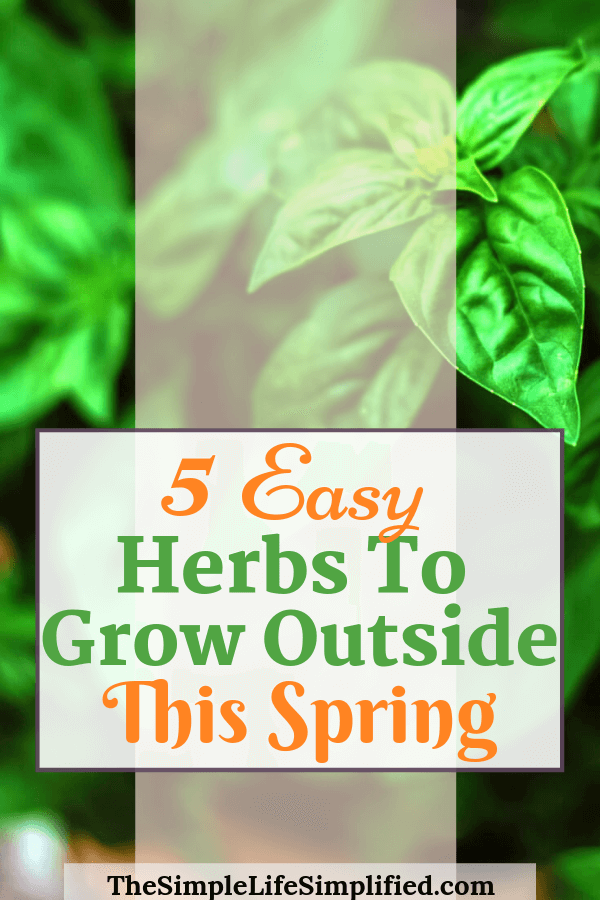 Easy Herbs To Grow Outdoor This Spring