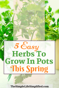 5 Easy Herbs To Grow Outdoors This Spring