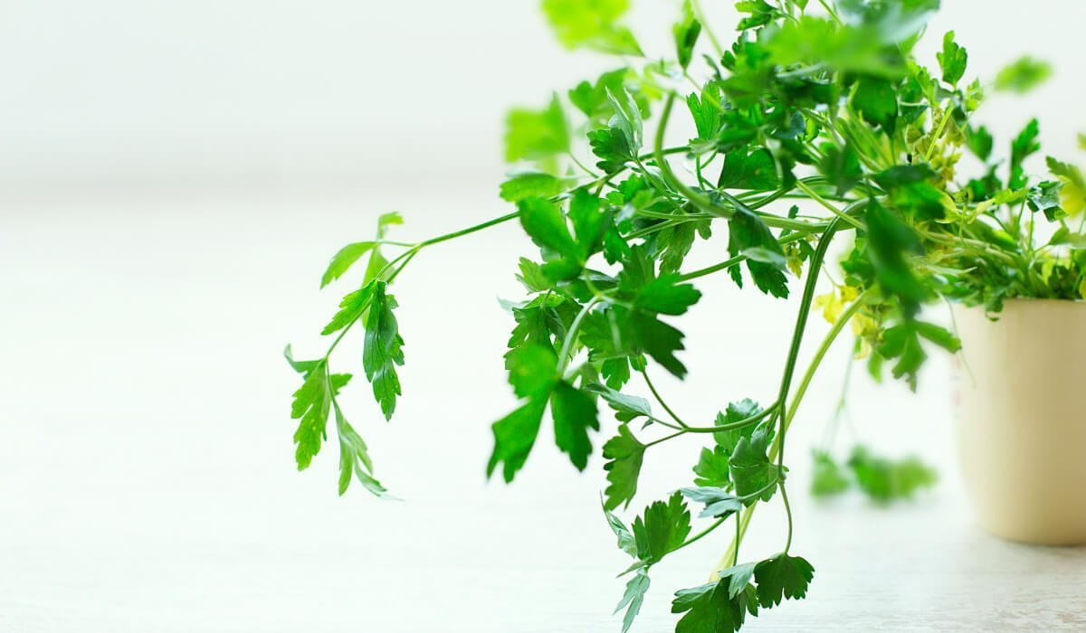 5 Easy Herbs To Grow Outside