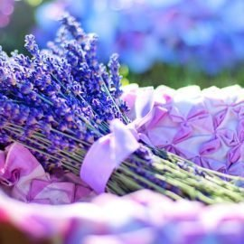 10 Lavender Essential Oil Uses And Benefits